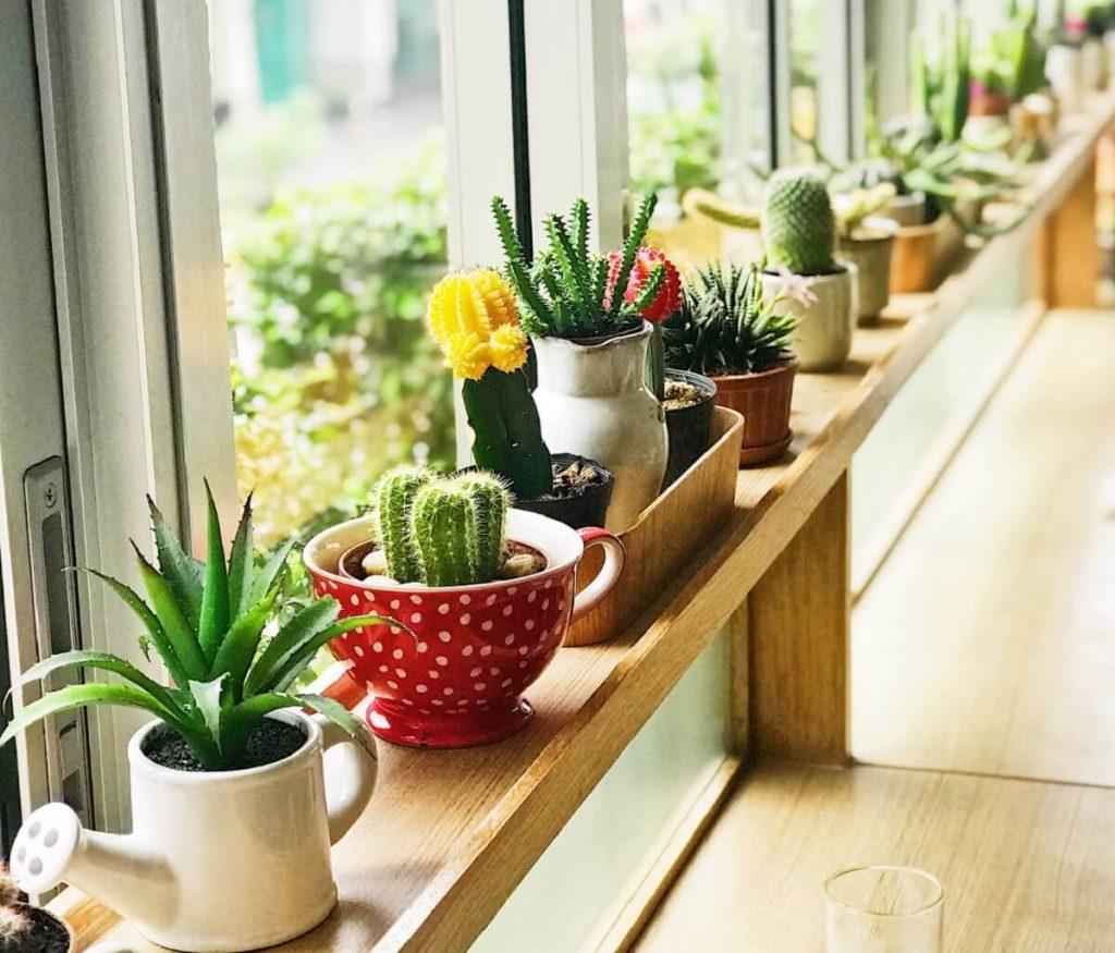 indoor succulents in a big window