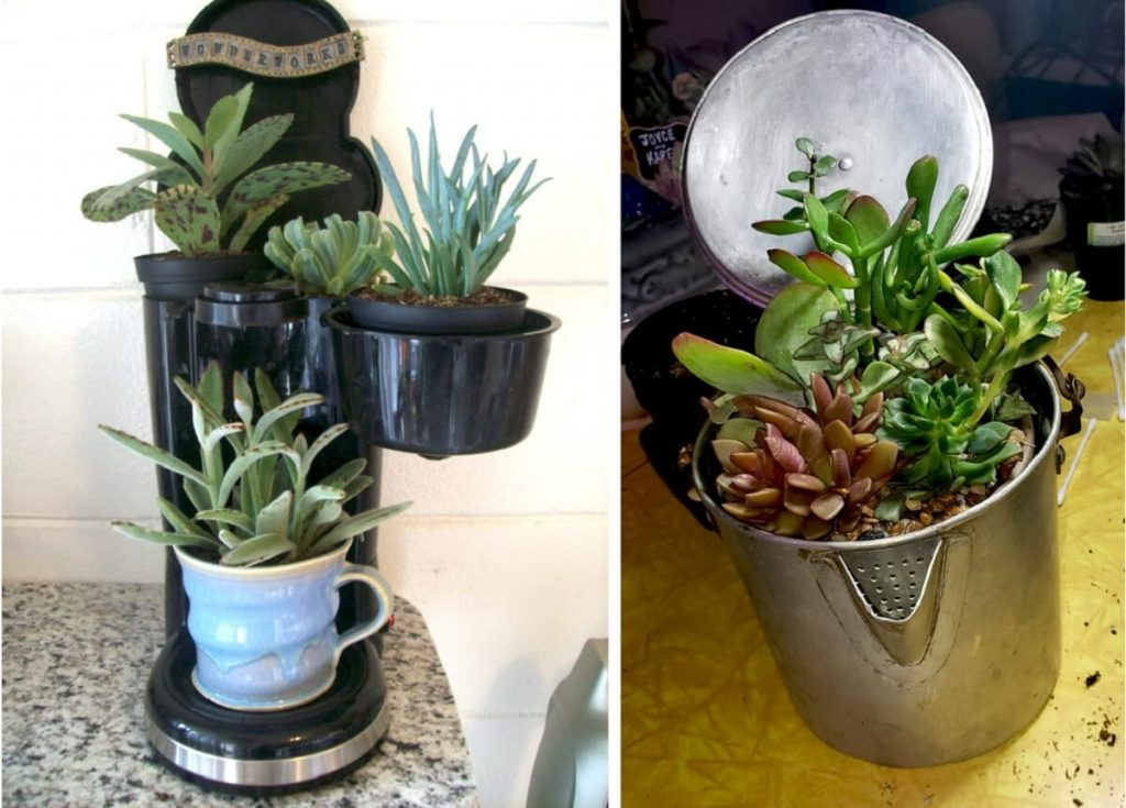 upcycle coffee makers into succulent planters