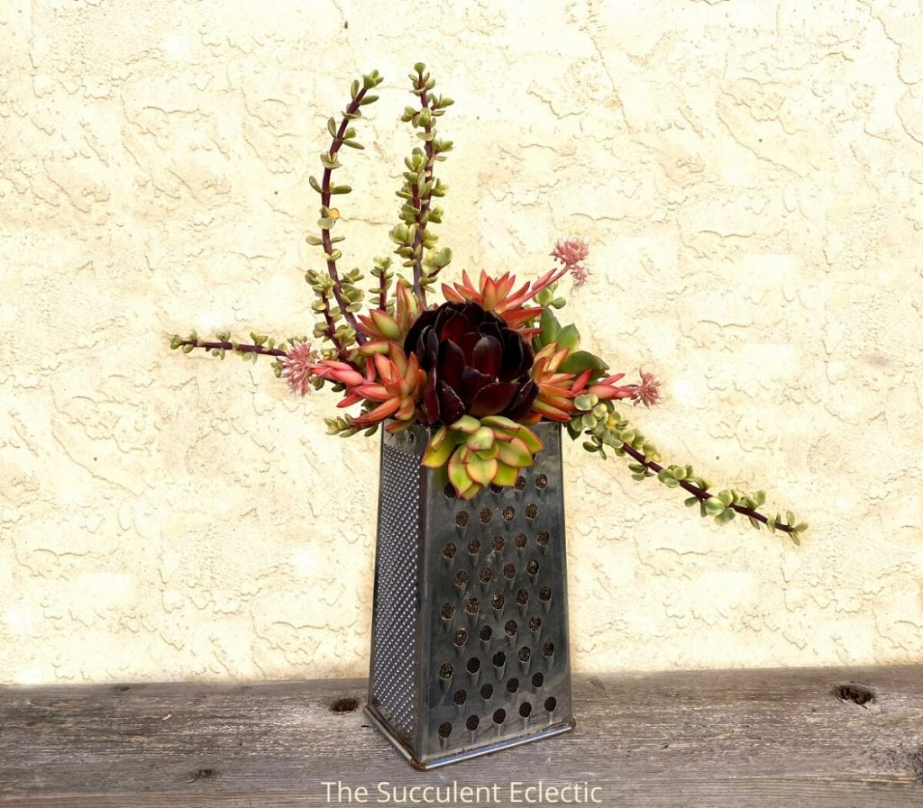 upcycled planter made from grater filled with succulents
