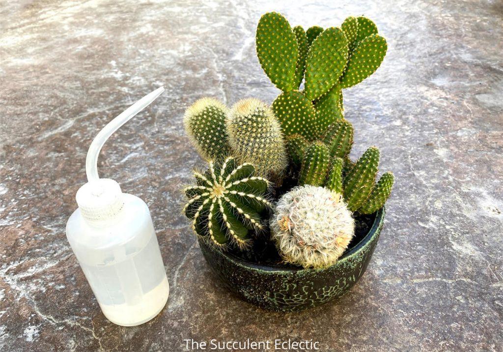 water bottle with cactus arrangement