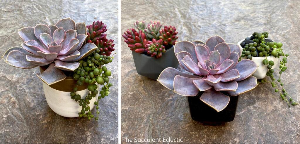 succulent trifecta makes succulent design simple