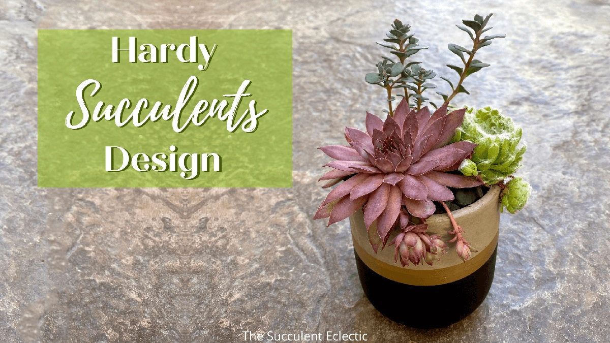 Read more about the article Gorgeous Hardy Succulents Design + 45 Hardy Varieties!
